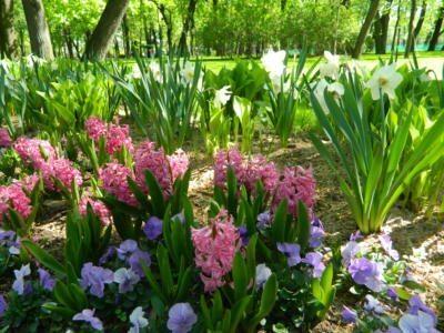Михайловский сад Весенние луковичные - Mikhailovsky Garden