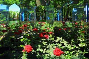 Императорские сады - Гюлистан
