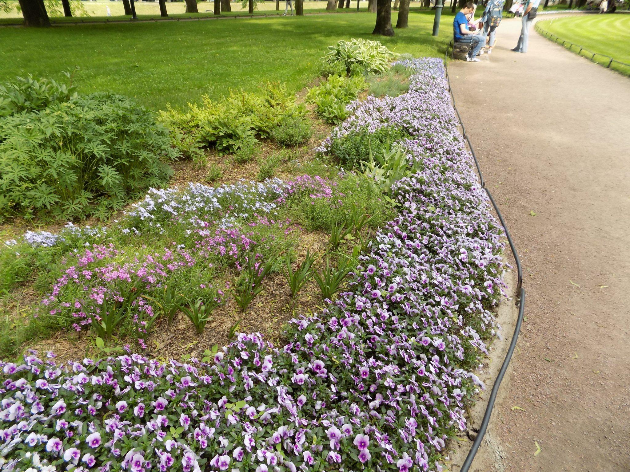Михайловский сад - Цветник- Mikhailovsky Garden