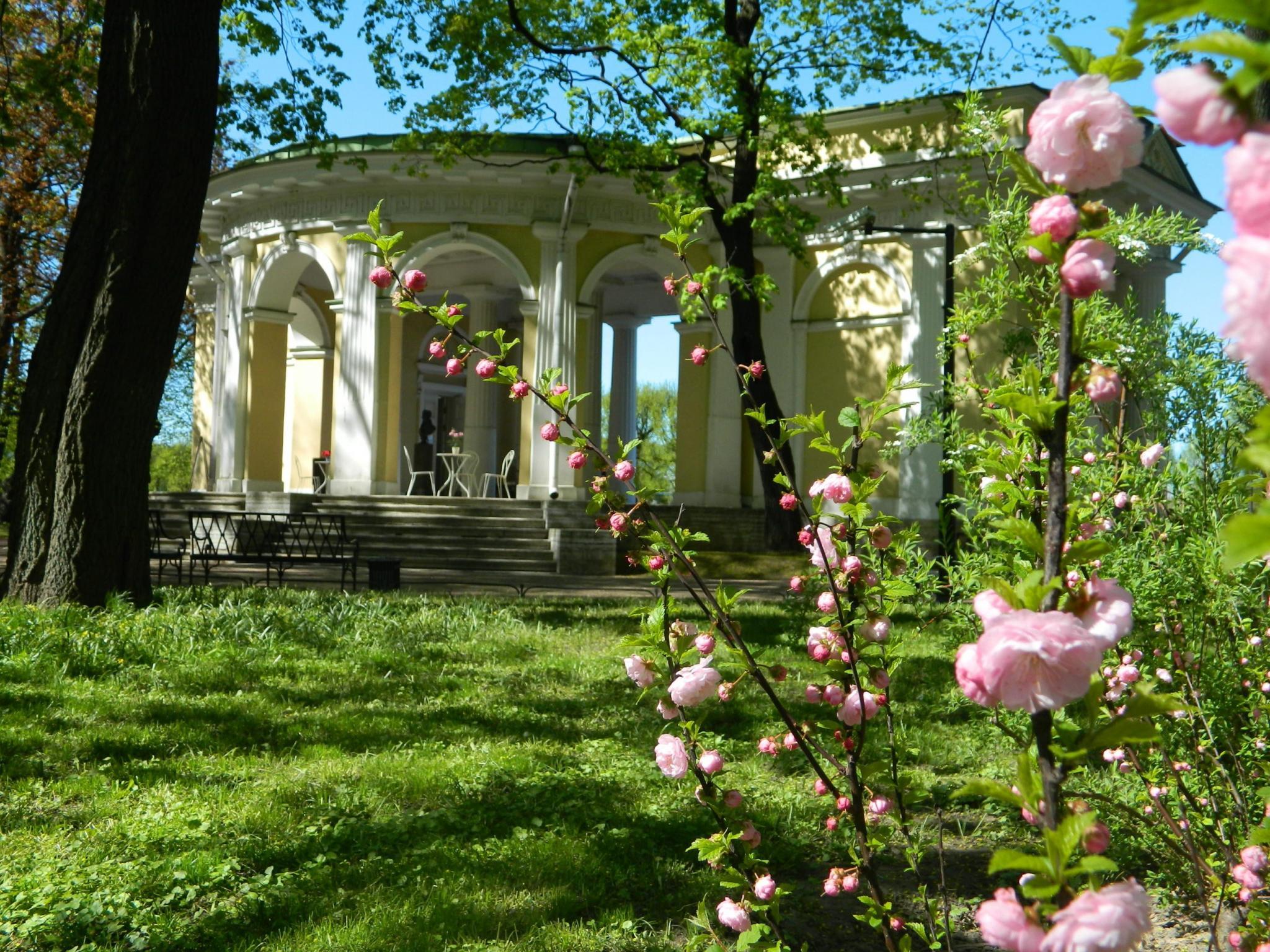 Цветущий миндаль у павильона Росси