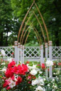 Императорские сады - цветник