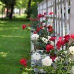 Императорские сады - розы
