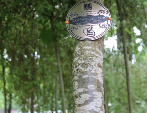 Акция «Древо жизни» в Михайловском саду