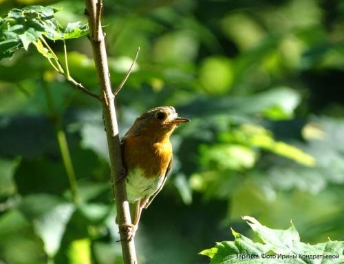 Международные Дни наблюдения птиц.