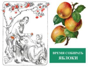 Время собирать яблоки. Яблочный спас в садах Русского музея 19 августа