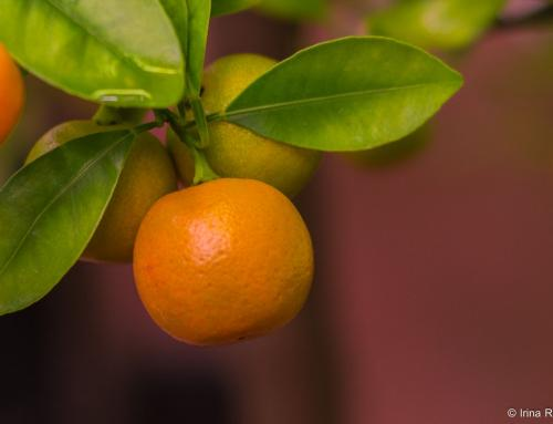 NEW CROP FROM SMALL ORANGE