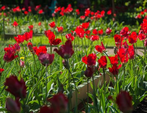 EXCURSIONS IN THE RED GARDEN