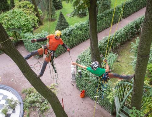 REPLACING SCREWS ON TREES